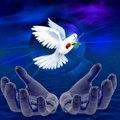 Anjo da Madrugada®