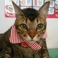 neko^^ Meow Meow