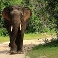 SL Wild Animals