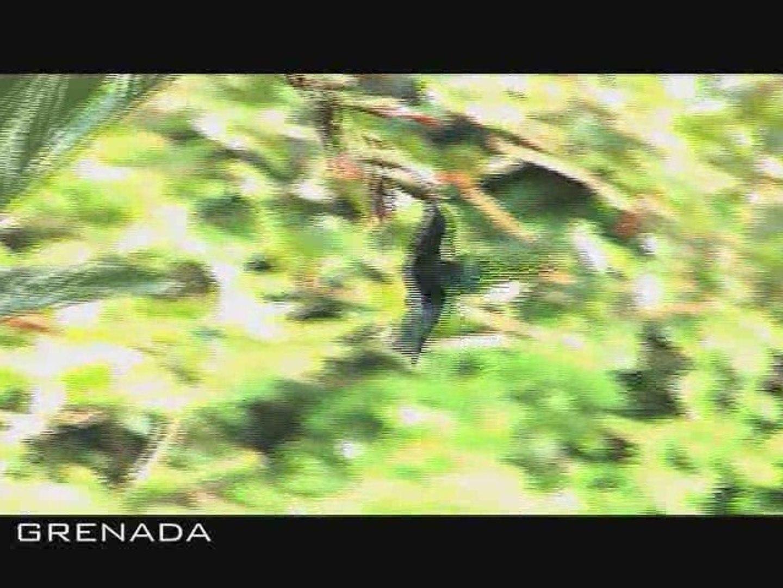 Grenada-TRailer