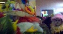 carnaval de Bergues 2009