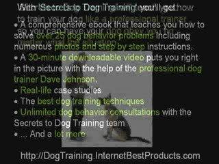 Dog Training – Secrets to Dog Training