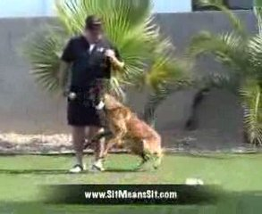 Tulsa Oklahoma Dog Training – Become a Dog Trainer!