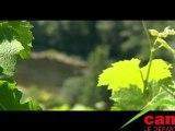 Les vins et vignobles sur terroir d'Entraygues et du Fel
