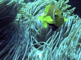 Maldiven Diving