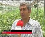 España estudia reclamar a Bruselas por los pepinos