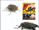 Objectif Découverte : Les insectes, les papillons