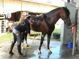 Haras de la Chaumière-Vente et dressage chevaux Vieux-Condé
