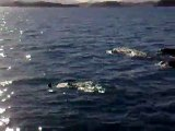 Les dauphins Les dauphins !!