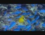 Voyage sous les mers 3D  - Bande annonce FR