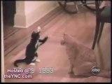 funny-cats-2-Koreus.com