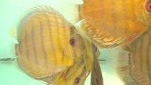 Exotic discount : vente de poissons exotiques, des aquariums