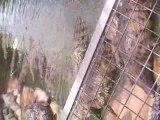 La ferme aux crocodiles pendant le repas des crocos (1/2)