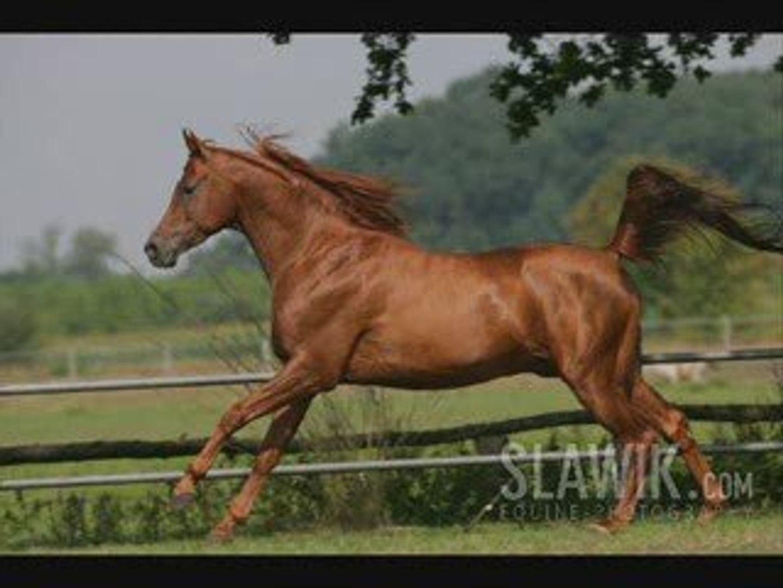 horse première