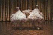 Foster Farms - Dancing Birds