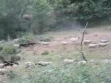Santiago 2009 (4/9) - troupeau de brebis