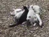 Lumi et ses 4 chatons