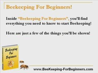 Beekeeping For Dummies! – Bee Keeping For Dummies!