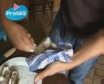 Comment ouvrir une huître sans couteau à huitres