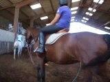 3 eme cours d'équitation de sylvie