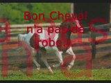 Proverbes et Citations du Cheval...