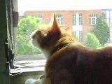 Le chat qui parle aux oiseaux
