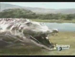 MUST SEE - Animal Face-Off - Crocodile vs Lion, versus vs