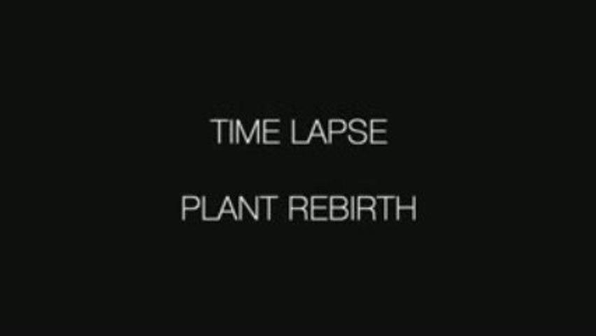 Plant Rebirth - Time Lapse