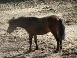 petite roulade de poney