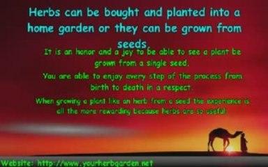 Herb Garden Information