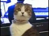 Un chat qui un regard assez bizzard
