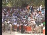 Journée à L'Ancienne du 21 Aout + la Bandido de 20 taureaux du Samedi 22 Aout Manade Lescot lors de la fète