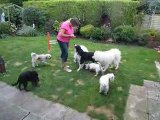 29th AUG 2009 The Fluffters Scramble