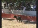 St Génies des Mourgues Trophées des Vaches Cocardières