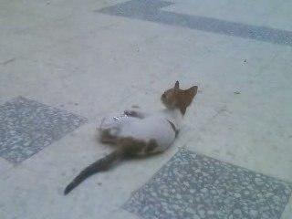 mon chat en Tunisie