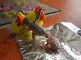 Perruches EAM et leur peluche 13 jours