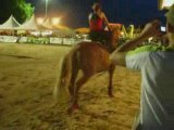Voltige Cosaque à la Féria du Cheval 2007