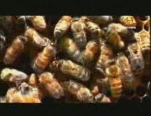 Origenes del sexo: Insectos