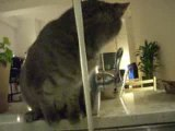 Un chat boit au robinet