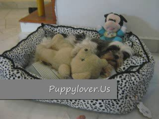 Cute Dog –  Puppy With Her Sleeping Bed
