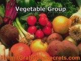 Land Hermit Crabs - 4 Basic Food Groups For Hermit Crabs