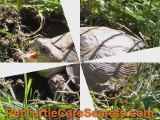 Russian Tortoise - How Do They Look Like?