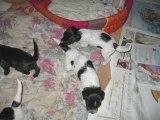 Les bébés de Cara et Achyl 23 septembre 2009