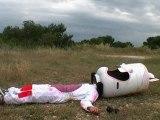 Le dernier chaud lapin (enterrement vie de garçon Marseille)