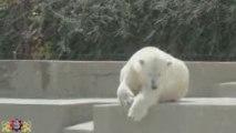 Mulhouse - Zoo de Mulhouse - Parc Zoologique et Botanique