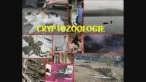 cryptozoologie, mon diapo perso
