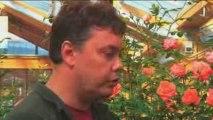 Conseils Jardinage : Quels rosiers planter cet automne ?