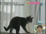 Le chat de régis vs fenêtre