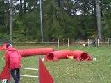 OPEN Concours agility sarreguemines Dixie Chanie Azur