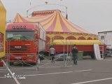 Les lionnes du cirque Zavatta se font la belle (Essonne)